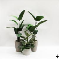 Plantas_04