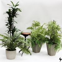 Plantas_07