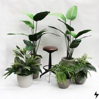Plantas_05