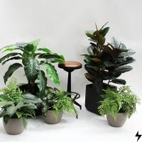 Plantas_09