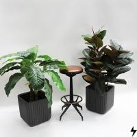 Plantas_10