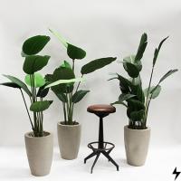 Plantas_14