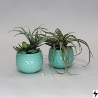 Plantas_03
