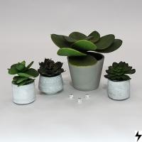 Plantas_06