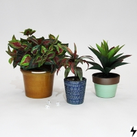 Plantas_11