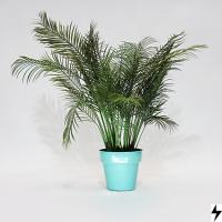 Plantas_01