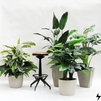 Plantas_08