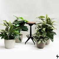 Plantas_12